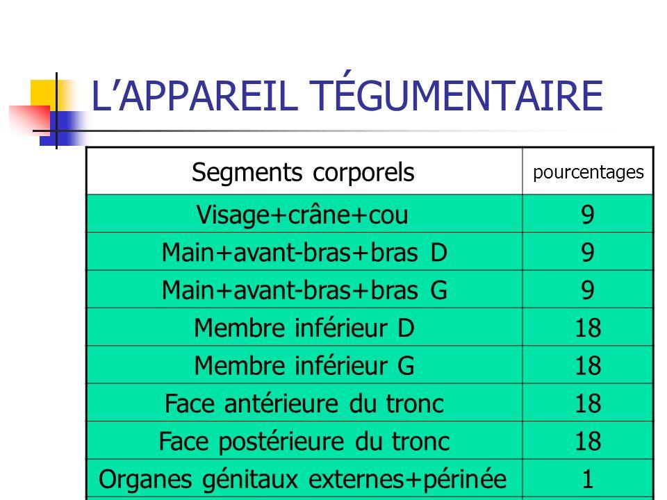 LAPPAREIL TÉGUMENTAIRE Segments corporels pourcentages Visage+crâne+cou9 Main+avant-bras+bras D9 Main+avant-bras+bras G9 Membre inférieur D18 Membre i