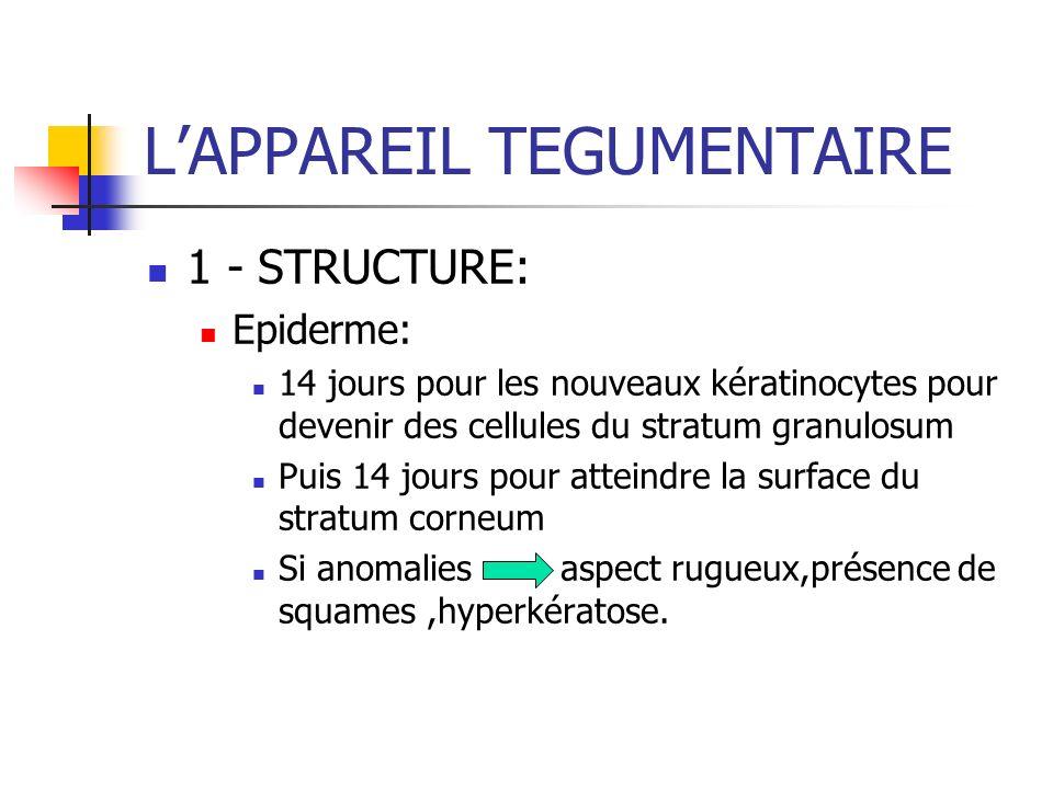 LAPPAREIL TEGUMENTAIRE 1 - STRUCTURE: Epiderme: 14 jours pour les nouveaux kératinocytes pour devenir des cellules du stratum granulosum Puis 14 jours