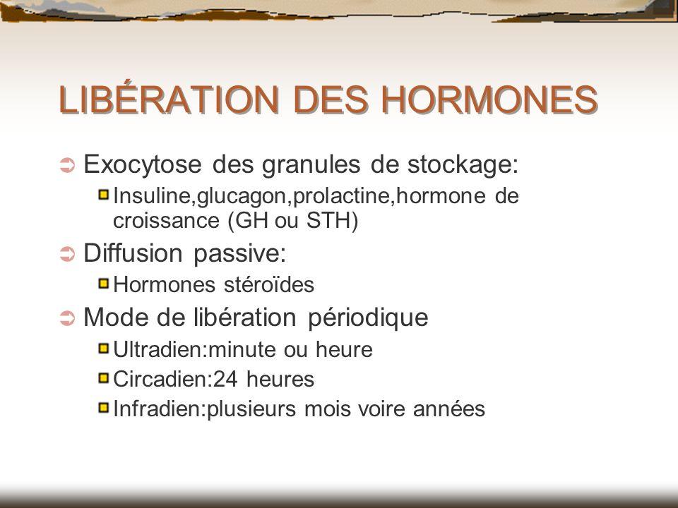 LIBÉRATION DES HORMONES Exocytose des granules de stockage: Insuline,glucagon,prolactine,hormone de croissance (GH ou STH) Diffusion passive: Hormones