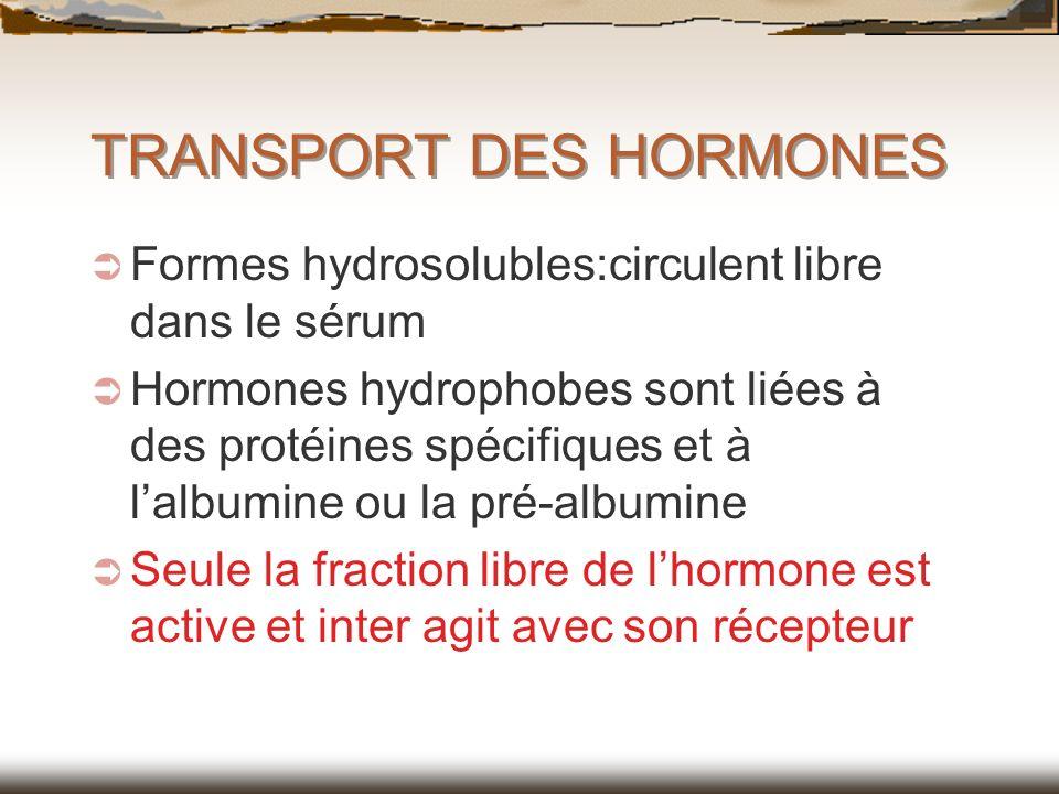 TRANSPORT DES HORMONES Formes hydrosolubles:circulent libre dans le sérum Hormones hydrophobes sont liées à des protéines spécifiques et à lalbumine o