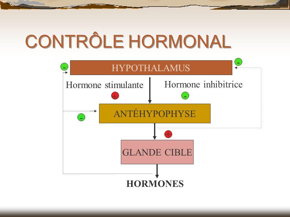 CONTRÔLE HORMONAL HYPOTHALAMUS ANTÉHYPOPHYSE GLANDE CIBLE HORMONES - - + Hormone stimulante Hormone inhibitrice + - -
