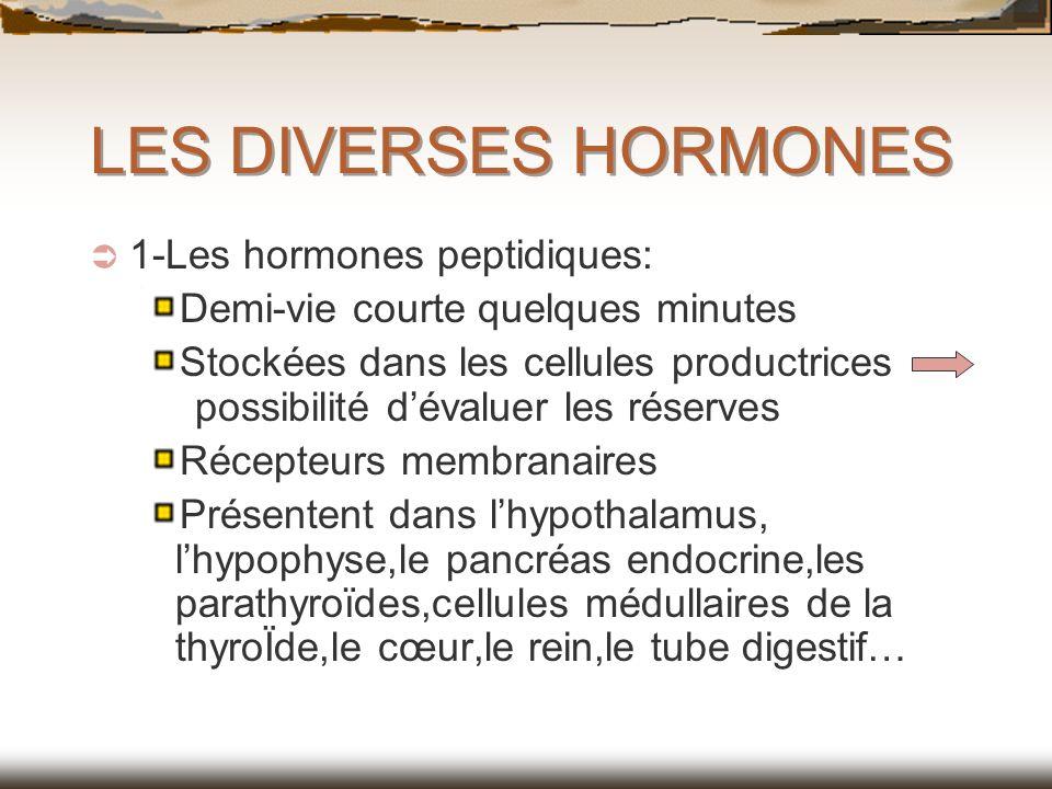 LES DIVERSES HORMONES 1-Les hormones peptidiques: Demi-vie courte quelques minutes Stockées dans les cellules productrices possibilité dévaluer les ré