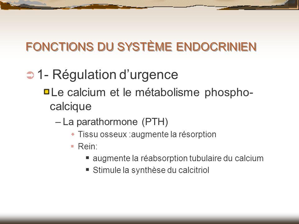 FONCTIONS DU SYSTÈME ENDOCRINIEN 1- Régulation durgence Le calcium et le métabolisme phospho- calcique –La parathormone (PTH) Tissu osseux :augmente l