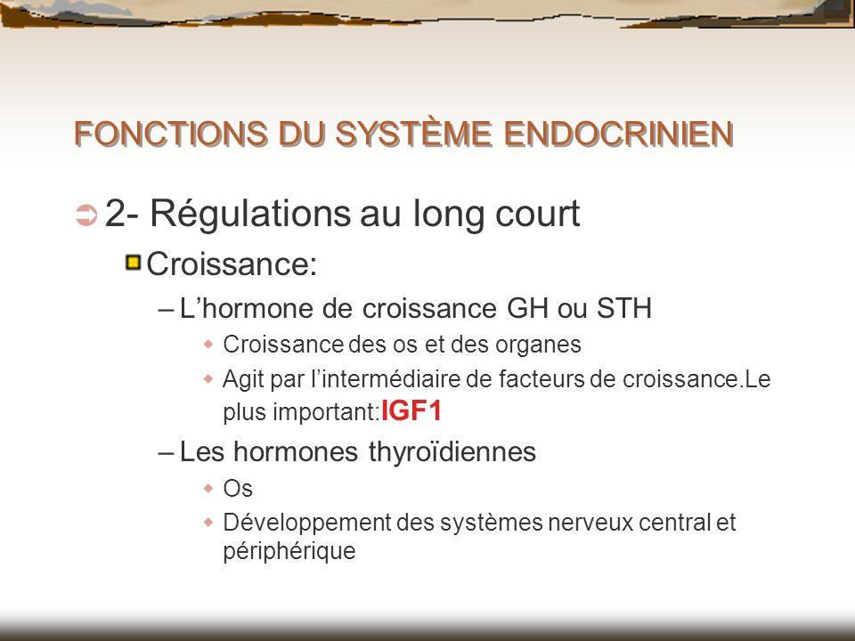 FONCTIONS DU SYSTÈME ENDOCRINIEN 2- Régulations au long court Croissance: –Lhormone de croissance GH ou STH Croissance des os et des organes Agit par