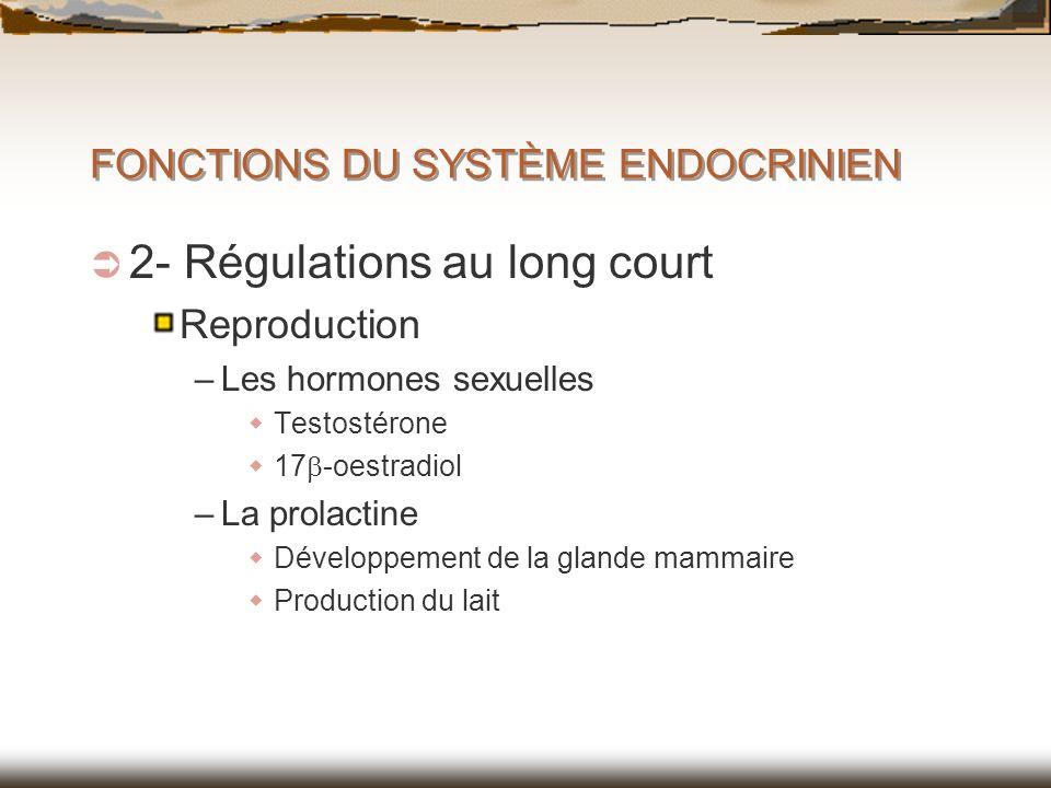 FONCTIONS DU SYSTÈME ENDOCRINIEN 2- Régulations au long court Reproduction –Les hormones sexuelles Testostérone 17 -oestradiol –La prolactine Développ