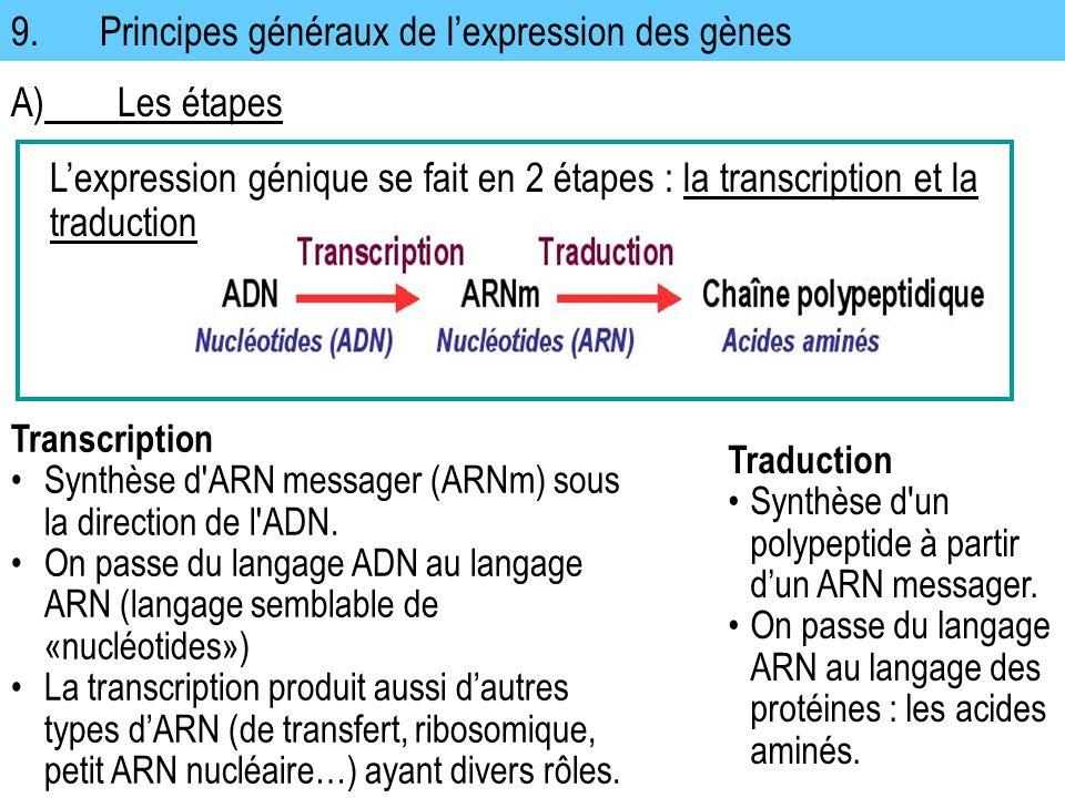 9.Principes généraux de lexpression des gènes Transcription Synthèse d'ARN messager (ARNm) sous la direction de l'ADN. On passe du langage ADN au lang