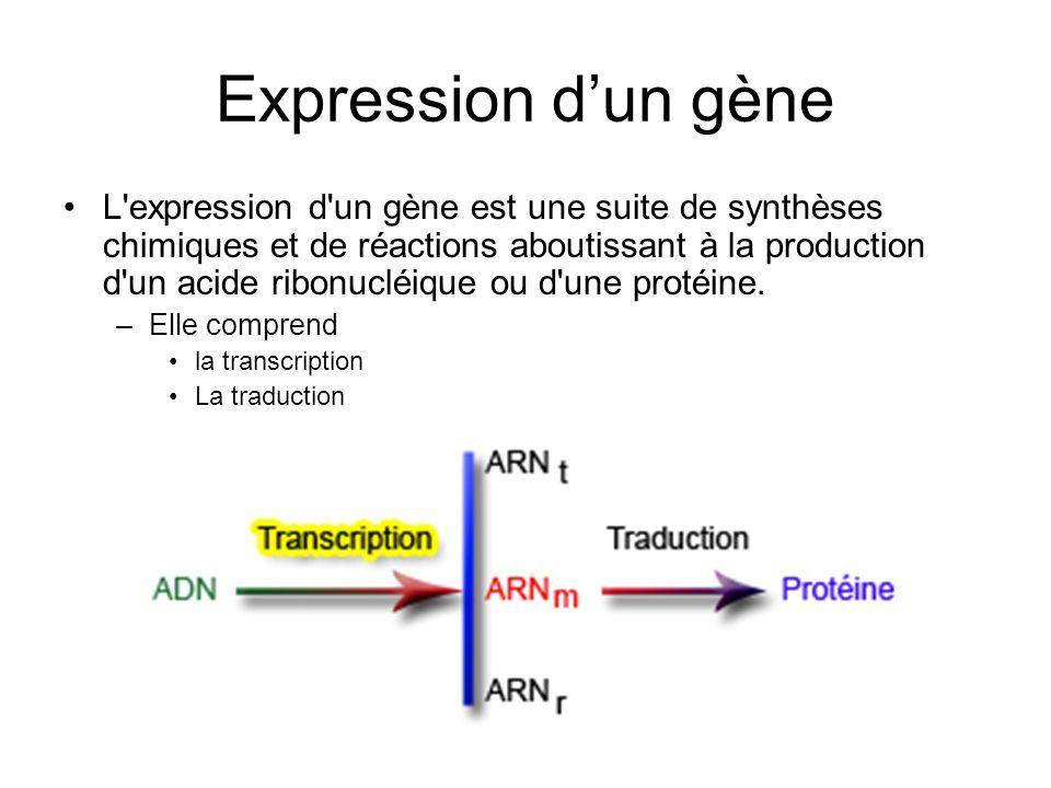 Expression dun gène L'expression d'un gène est une suite de synthèses chimiques et de réactions aboutissant à la production d'un acide ribonucléique o
