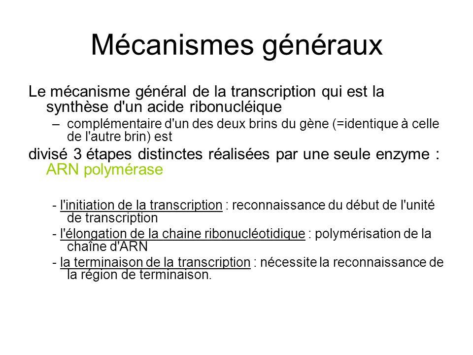 Mécanismes généraux Le mécanisme général de la transcription qui est la synthèse d'un acide ribonucléique –complémentaire d'un des deux brins du gène
