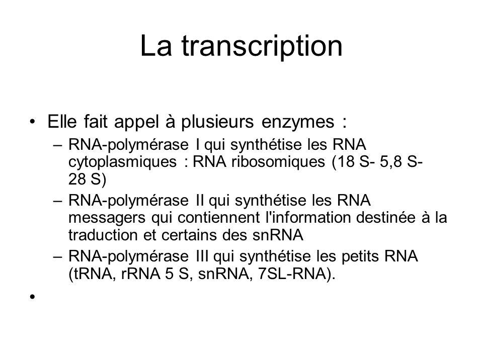 La transcription Elle fait appel à plusieurs enzymes : –RNA-polymérase I qui synthétise les RNA cytoplasmiques : RNA ribosomiques (18 S- 5,8 S- 28 S)