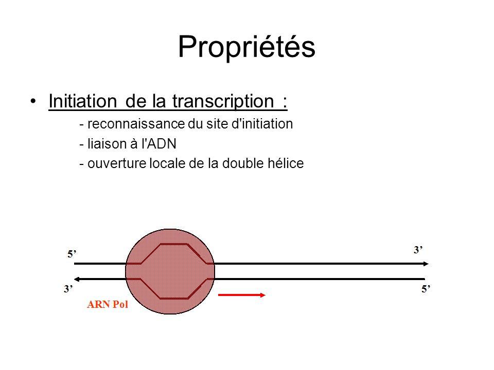 Propriétés Initiation de la transcription : - reconnaissance du site d'initiation - liaison à l'ADN - ouverture locale de la double hélice
