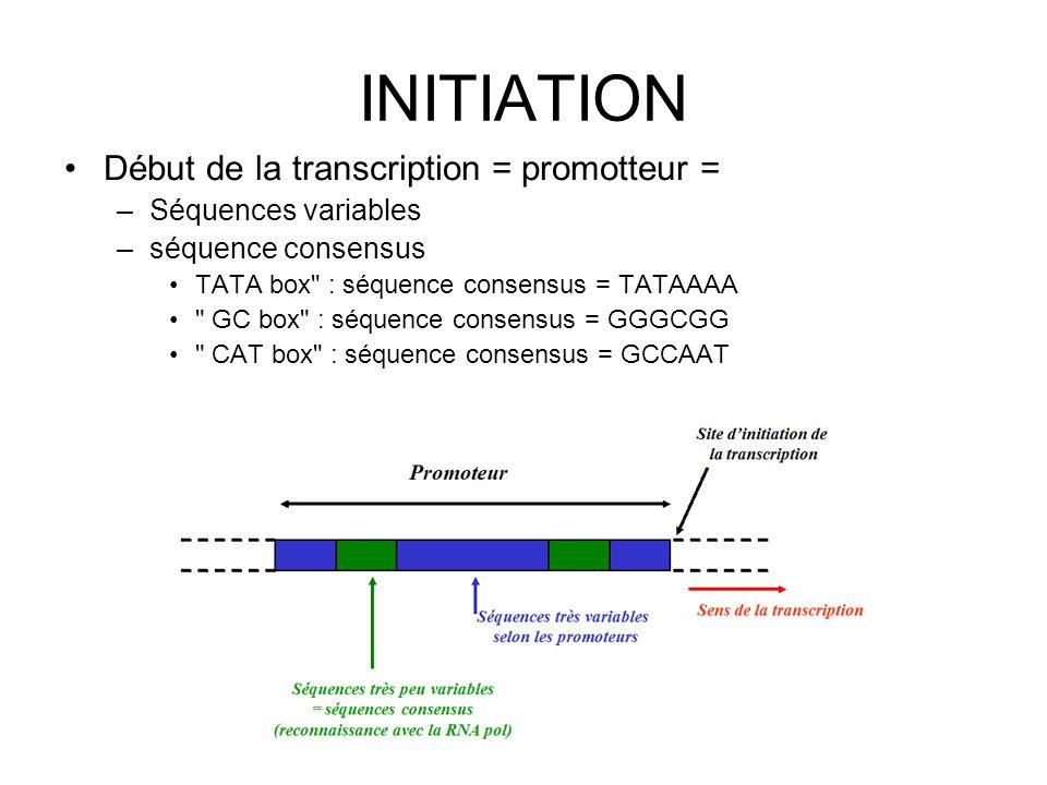 INITIATION Début de la transcription = promotteur = –Séquences variables –séquence consensus TATA box