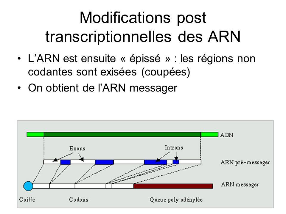 Modifications post transcriptionnelles des ARN LARN est ensuite « épissé » : les régions non codantes sont exisées (coupées) On obtient de lARN messag