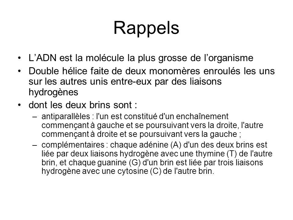 Rappels Les monomères sont constitués dunités = nucléotide (sucre (désoxyribose) + Ac phosphorique + base purique (Adénine ou Guanine) ou base pyrimidique (Cytosine ou Thymine)) A= T C = G...AGAGTCGTCTCGAGTCA......TCTCAGCAGAGCTCAGT...