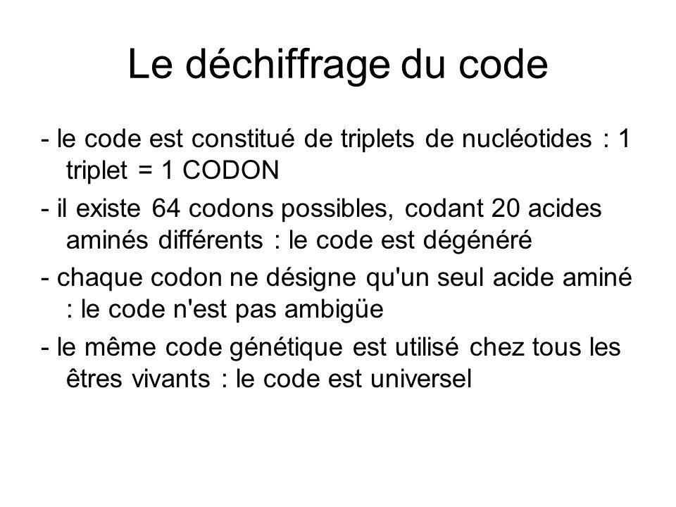 Le déchiffrage du code - le code est constitué de triplets de nucléotides : 1 triplet = 1 CODON - il existe 64 codons possibles, codant 20 acides amin