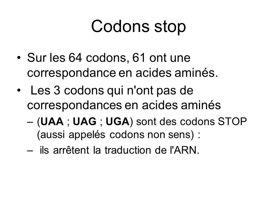 Codons stop Sur les 64 codons, 61 ont une correspondance en acides aminés. Les 3 codons qui n'ont pas de correspondances en acides aminés –(UAA ; UAG
