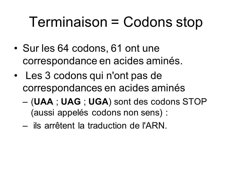 Terminaison = Codons stop Sur les 64 codons, 61 ont une correspondance en acides aminés. Les 3 codons qui n'ont pas de correspondances en acides aminé