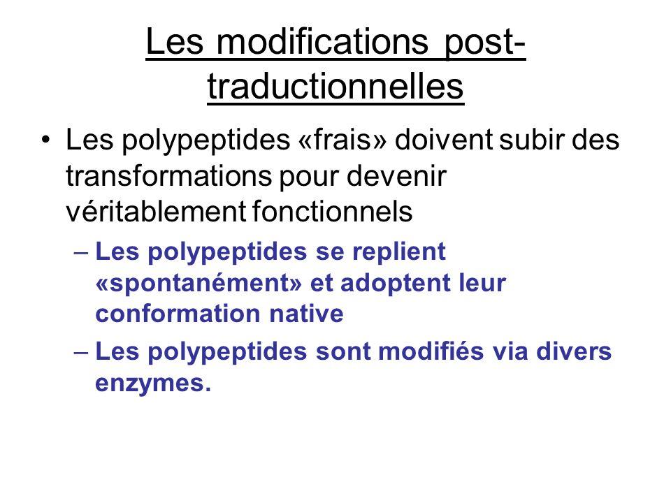 Les modifications post- traductionnelles Les polypeptides «frais» doivent subir des transformations pour devenir véritablement fonctionnels –Les polyp