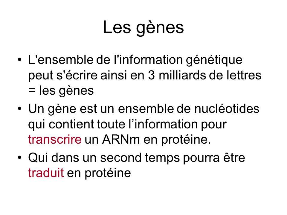 Les gènes Tout le génome nest pas réparti en gènes (5% environ) Longueur dun gène : de qqs centaines à 1 million de paires de bases (bp) (de nucléotides)