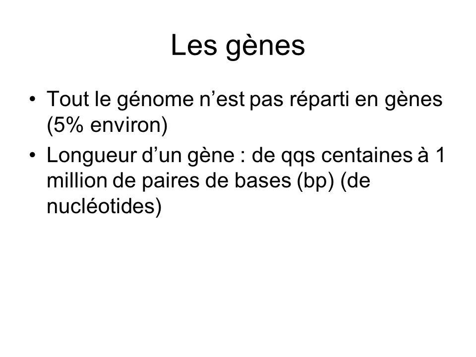 Les gènes Tout le génome nest pas réparti en gènes (5% environ) Longueur dun gène : de qqs centaines à 1 million de paires de bases (bp) (de nucléotid