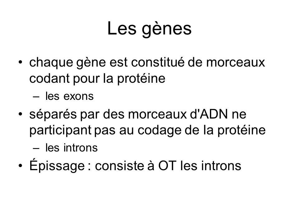 Les gènes chaque gène est constitué de morceaux codant pour la protéine – les exons séparés par des morceaux d'ADN ne participant pas au codage de la