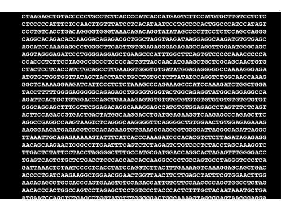 T A C C T G A A C G T C G T G A T T La transcription ADN ARN prémessager DU GÈNE À LA PROTÉINE 53 ADN 35 ARN prémessager A U G G A C U U G C A G C A C U A A LA RELATION ENTRE GÈNES ET PROTÉINES
