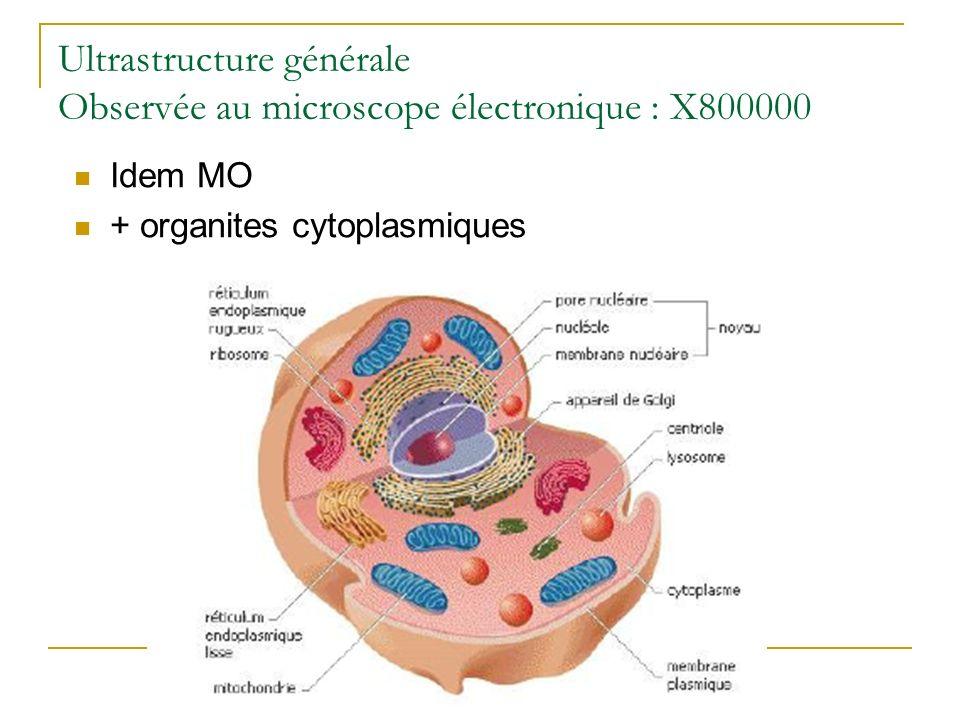 Ultrastructure générale Observée au microscope électronique : X800000 Idem MO + organites cytoplasmiques
