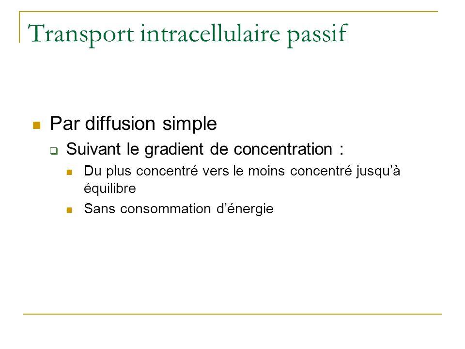 Transport intracellulaire passif Par diffusion simple Suivant le gradient de concentration : Du plus concentré vers le moins concentré jusquà équilibr