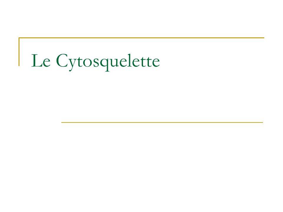 Le Cytosquelette