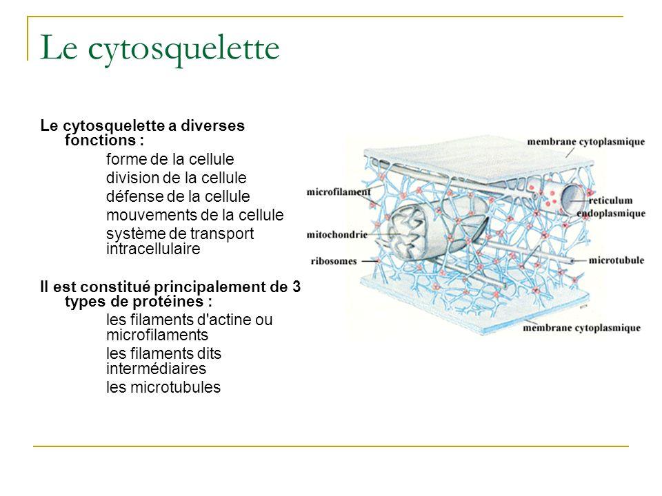 Le cytosquelette Le cytosquelette a diverses fonctions : forme de la cellule division de la cellule défense de la cellule mouvements de la cellule sys