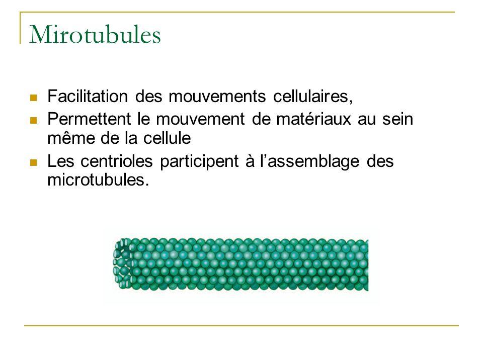 Mirotubules Facilitation des mouvements cellulaires, Permettent le mouvement de matériaux au sein même de la cellule Les centrioles participent à lass