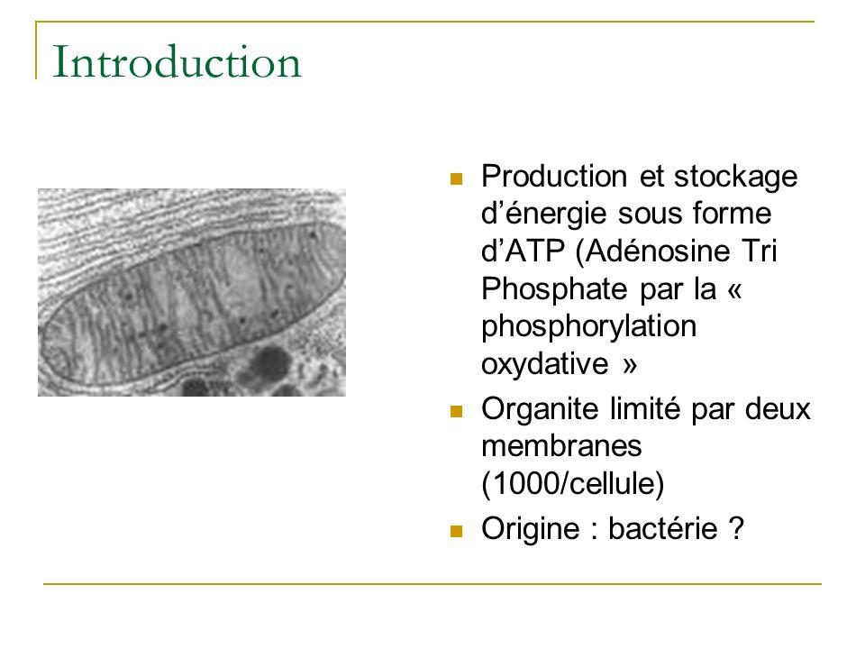 Introduction Production et stockage dénergie sous forme dATP (Adénosine Tri Phosphate par la « phosphorylation oxydative » Organite limité par deux me