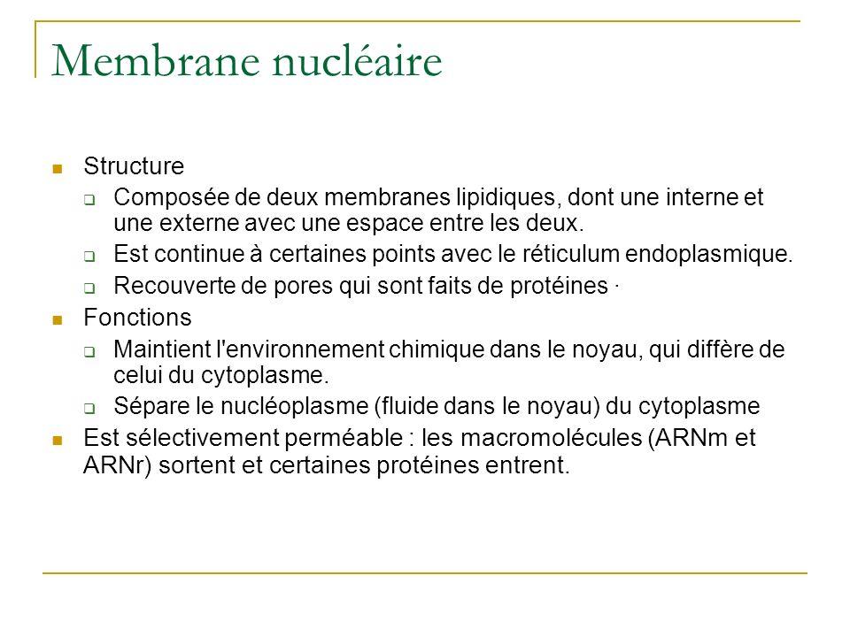 Membrane nucléaire Structure Composée de deux membranes lipidiques, dont une interne et une externe avec une espace entre les deux. Est continue à cer