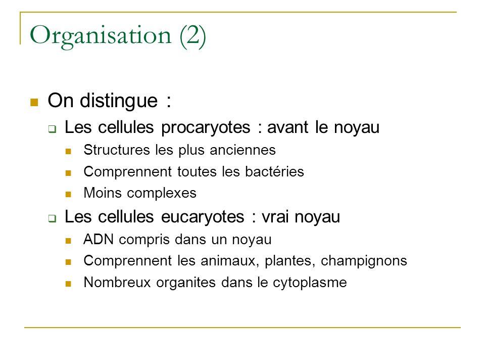 Organisation (2) On distingue : Les cellules procaryotes : avant le noyau Structures les plus anciennes Comprennent toutes les bactéries Moins complex