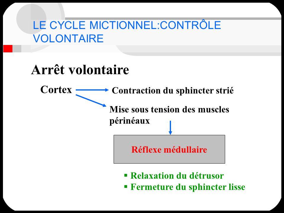 LE CYCLE MICTIONNEL:CONTRÔLE VOLONTAIRE Arrêt volontaire Cortex Contraction du sphincter strié Mise sous tension des muscles périnéaux Réflexe médulla