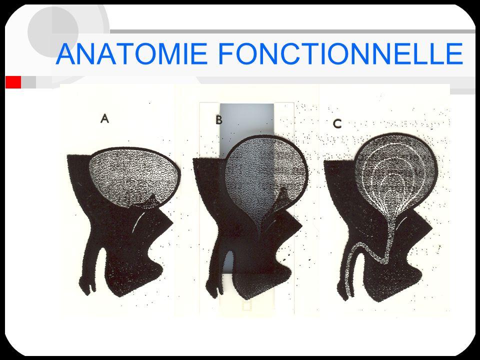 Innervation: Végétative: Sympathique:T11 - L2 corne latérale de la moelle dorso-lombaire:nerfs hypogastriques supérieurs Parasympathique:moelle sacrée S2 -S4:plexus hypogastrique inférieur Somatique:corne antérieure de la moelle sacrée:S2,S3,S4:nerf pudendal;innervation du sphincter externe et du plancher pelvien