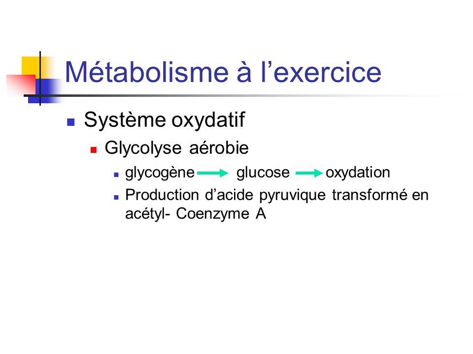 Métabolisme à lexercice Système oxydatif Glycolyse aérobie glycogène glucose oxydation Production dacide pyruvique transformé en acétyl- Coenzyme A