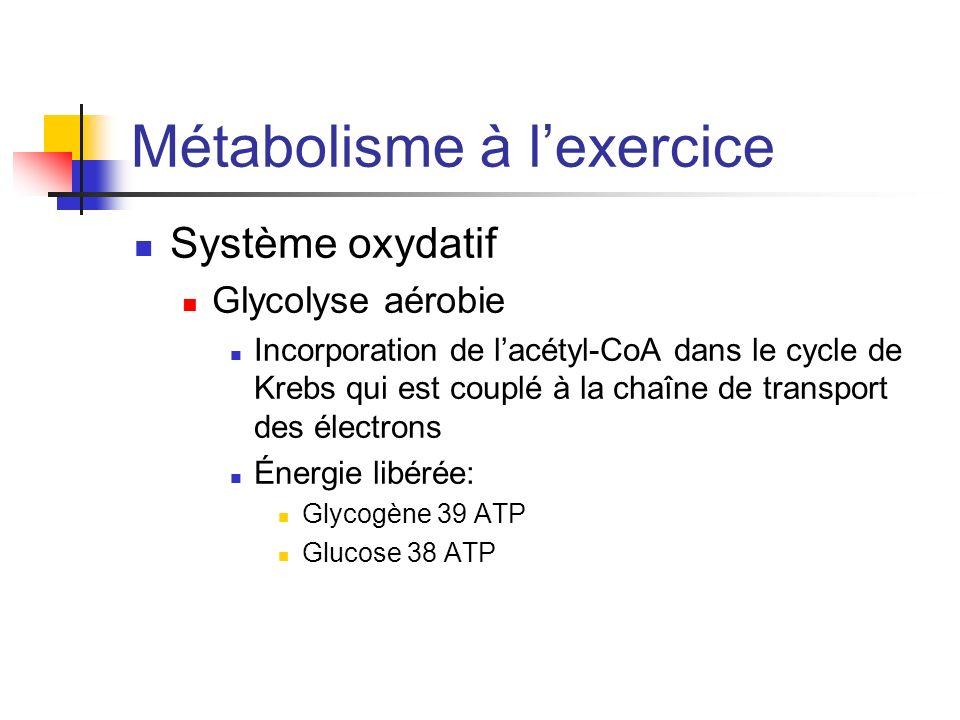 Métabolisme à lexercice Système oxydatif Glycolyse aérobie Incorporation de lacétyl-CoA dans le cycle de Krebs qui est couplé à la chaîne de transport