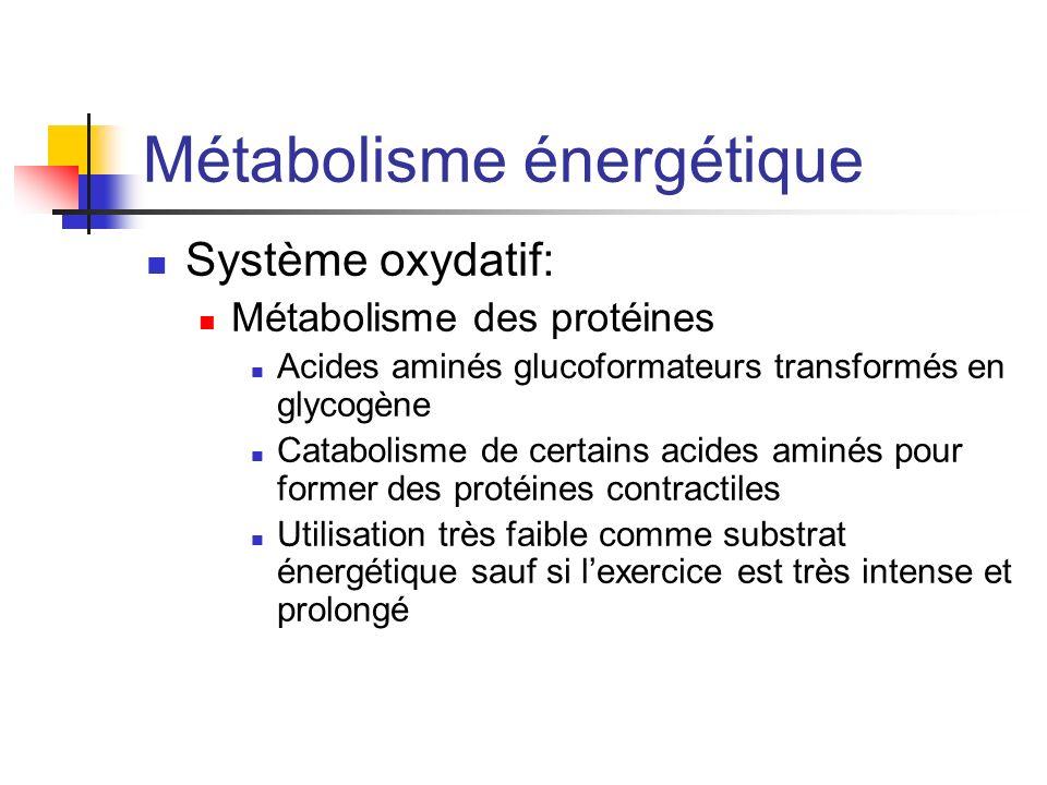 Métabolisme énergétique Système oxydatif: Métabolisme des protéines Acides aminés glucoformateurs transformés en glycogène Catabolisme de certains aci