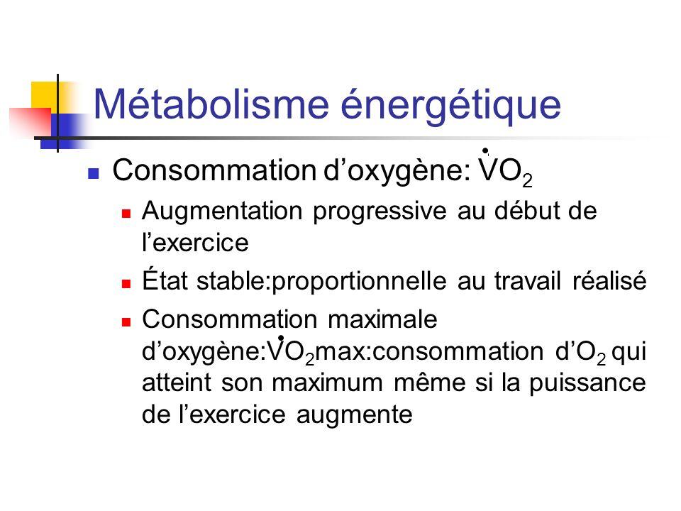 Métabolisme énergétique Consommation doxygène: VO 2 Augmentation progressive au début de lexercice État stable:proportionnelle au travail réalisé Cons