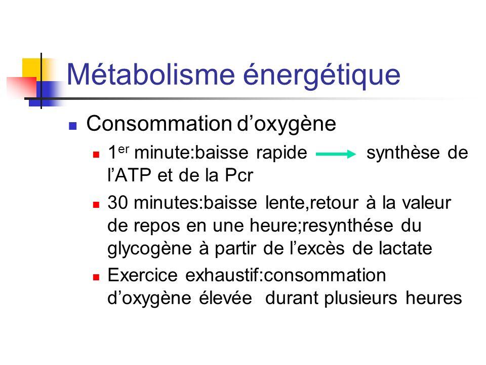 Métabolisme énergétique Consommation doxygène 1 er minute:baisse rapide synthèse de lATP et de la Pcr 30 minutes:baisse lente,retour à la valeur de re