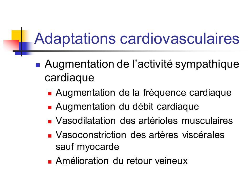 Adaptations cardiovasculaires Augmentation de lactivité sympathique cardiaque Augmentation de la fréquence cardiaque Augmentation du débit cardiaque V