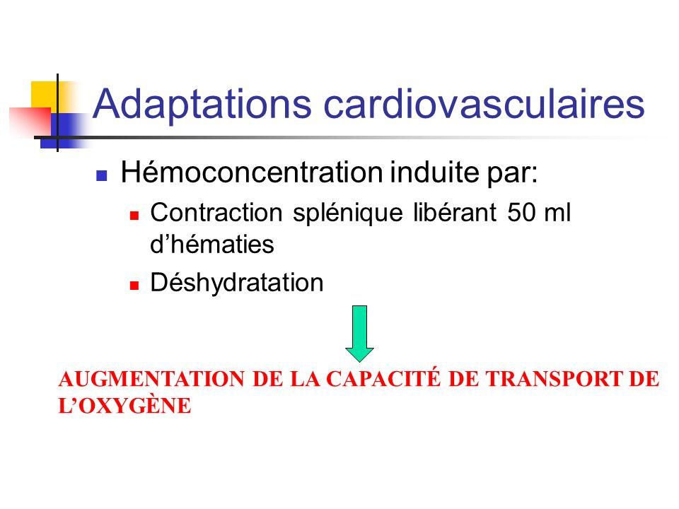 Adaptations cardiovasculaires Hémoconcentration induite par: Contraction splénique libérant 50 ml dhématies Déshydratation AUGMENTATION DE LA CAPACITÉ