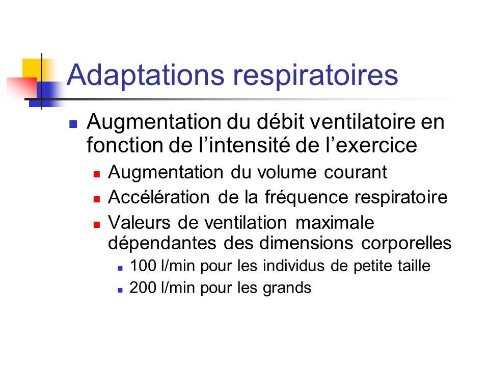 Adaptations respiratoires Augmentation du débit ventilatoire en fonction de lintensité de lexercice Augmentation du volume courant Accélération de la