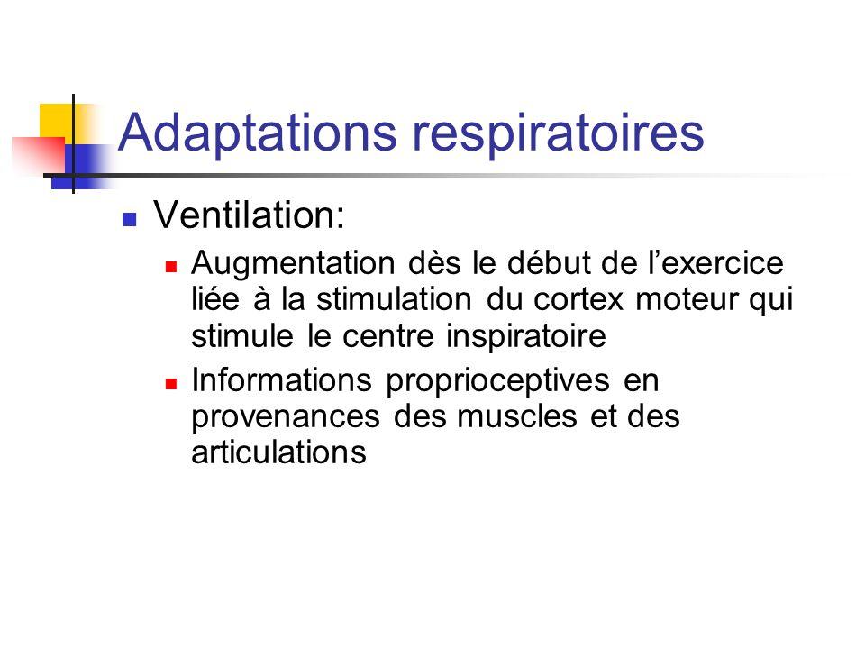 Adaptations respiratoires Ventilation: Augmentation dès le début de lexercice liée à la stimulation du cortex moteur qui stimule le centre inspiratoir