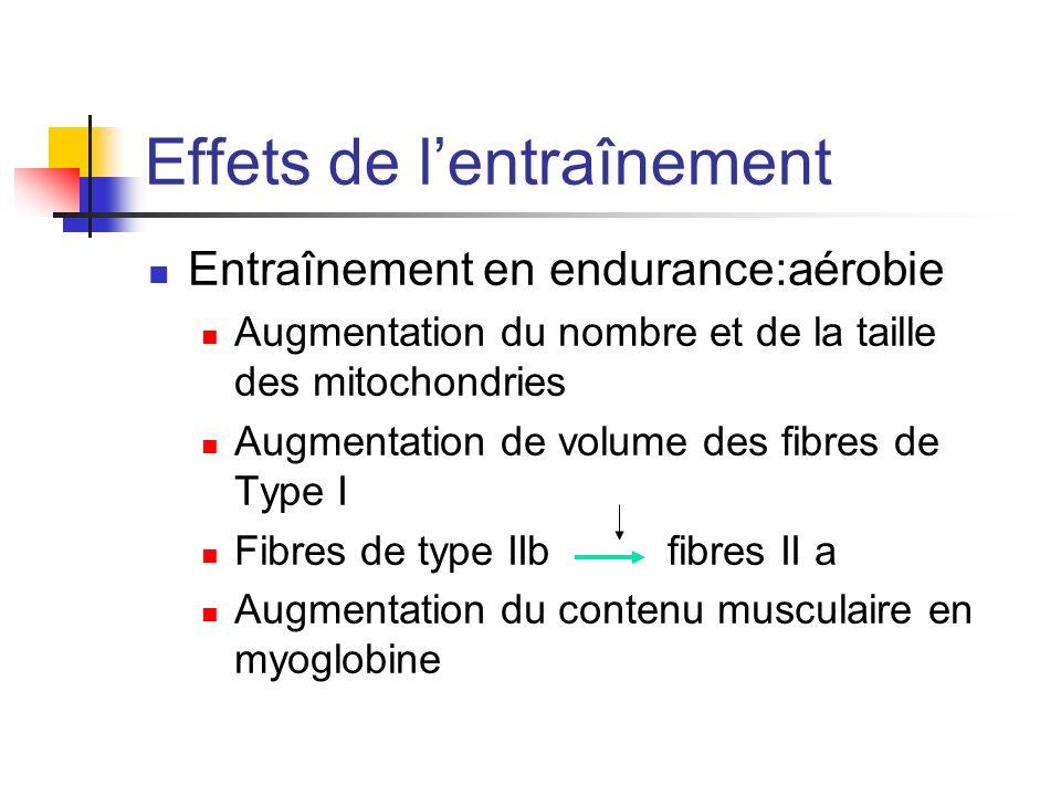 Effets de lentraînement Entraînement en endurance:aérobie Augmentation du nombre et de la taille des mitochondries Augmentation de volume des fibres d