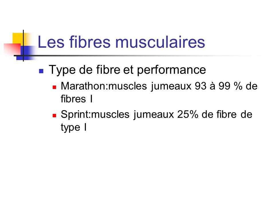 Les fibres musculaires Type de fibre et performance Marathon:muscles jumeaux 93 à 99 % de fibres I Sprint:muscles jumeaux 25% de fibre de type I