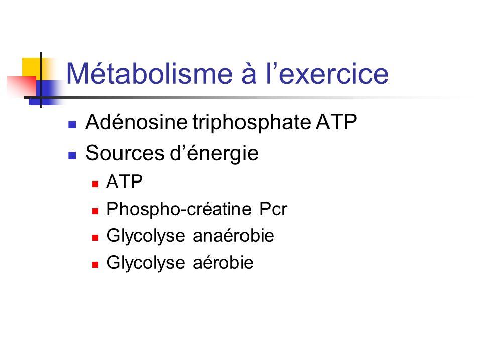 Métabolisme à lexercice Adénosine triphosphate ATP Sources dénergie ATP Phospho-créatine Pcr Glycolyse anaérobie Glycolyse aérobie