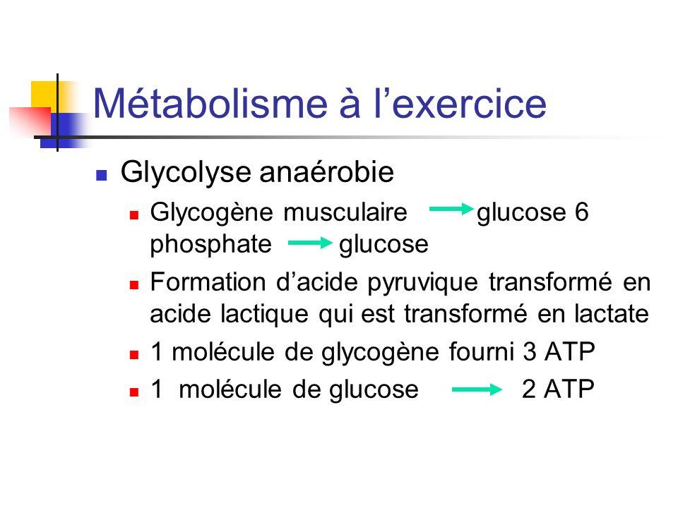 Métabolisme à lexercice Glycolyse anaérobie Glycogène musculaire glucose 6 phosphate glucose Formation dacide pyruvique transformé en acide lactique q