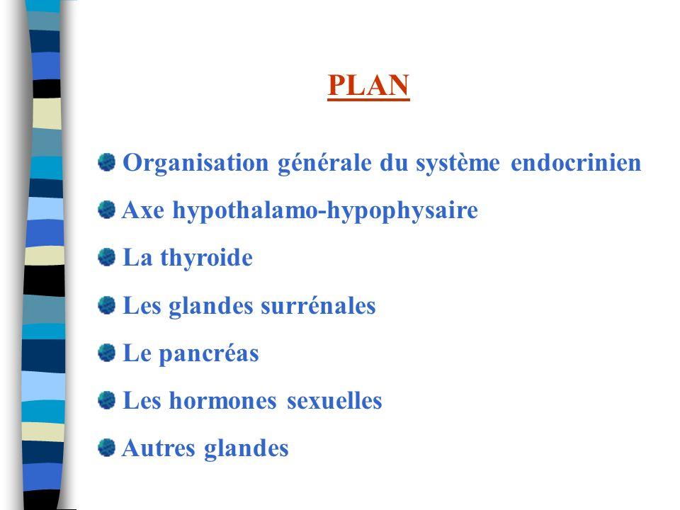 PLAN Organisation générale du système endocrinien Axe hypothalamo-hypophysaire La thyroide Les glandes surrénales Le pancréas Les hormones sexuelles A