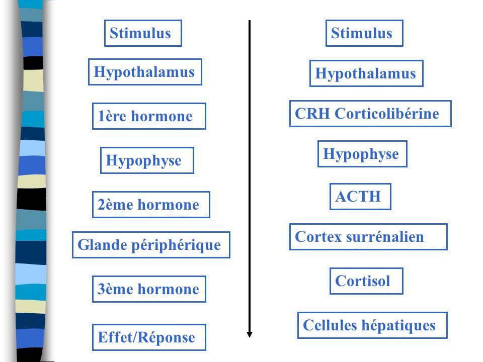 Stimulus Hypothalamus 1ère hormone Hypophyse 2ème hormone Glande périphérique 3ème hormone Effet/Réponse Stimulus Hypothalamus CRH Corticolibérine Hyp